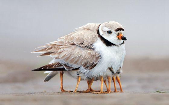 Бесплатные фото птенцы,лапки,когти,клюв,тепло,перья,пух,холод,земля,песок,малыши,мама
