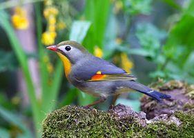 Фото бесплатно птичка, щёлкает, клювом