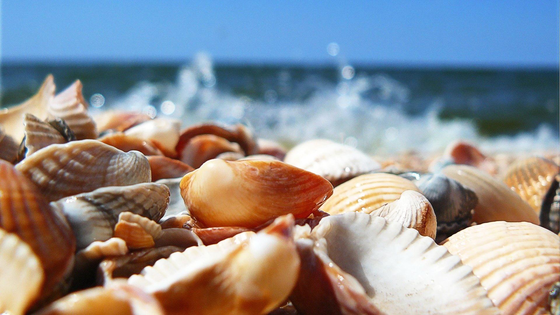 картинка морских узлов