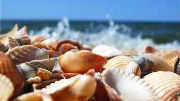 Обои ракушки, берег, пляж, море, океан, вода, волны, пена, юг, лето, подводный мир