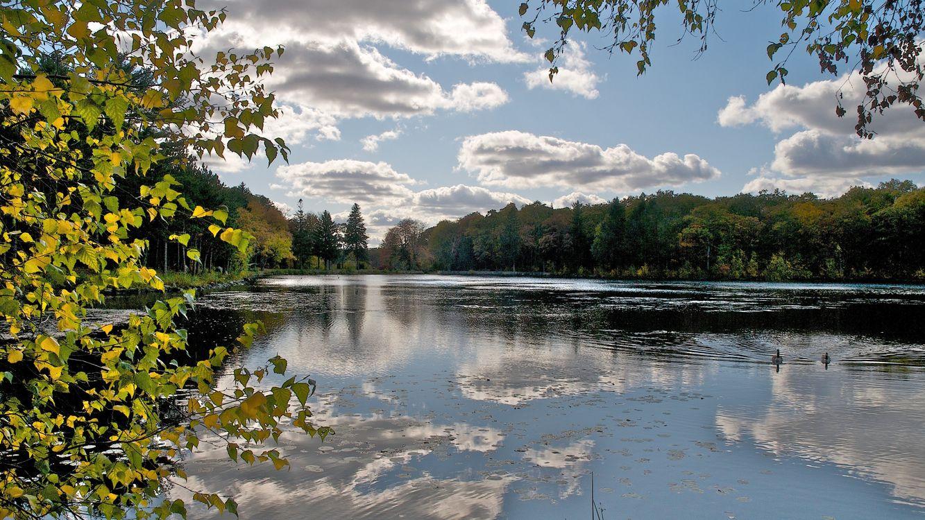 Фото бесплатно река, лес, небо, облака, отражение, вода, береза, деревья, листья, природа, пейзажи, пейзажи