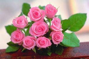 Обои розы, розовые, лепестки, листья, шипы, букет, подарок, сюрприз, цветы