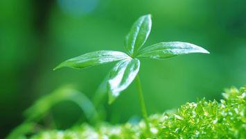 Фото бесплатно трава, листики, зелень