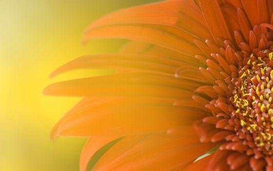 Фото бесплатно цветок, лепестки, серединка