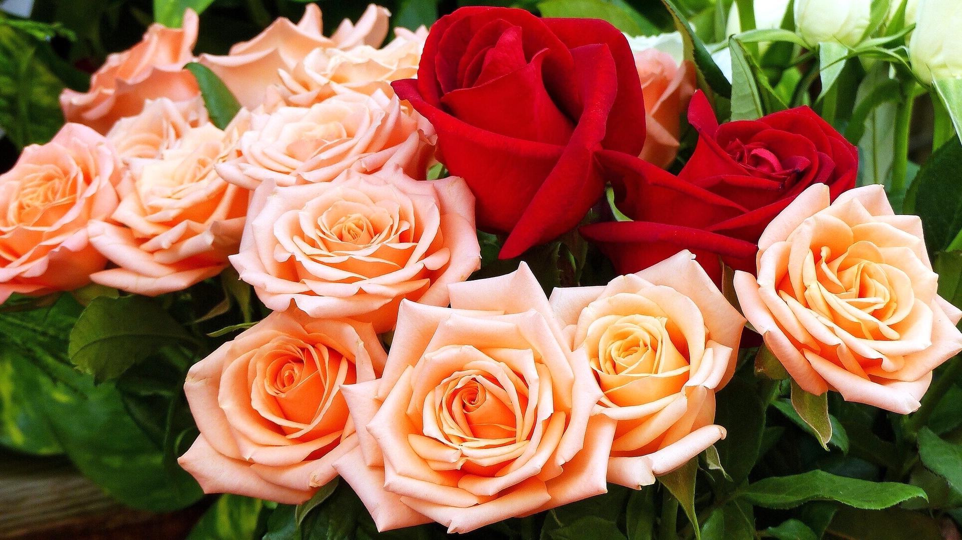 обои цветы, розы, букет картинки фото