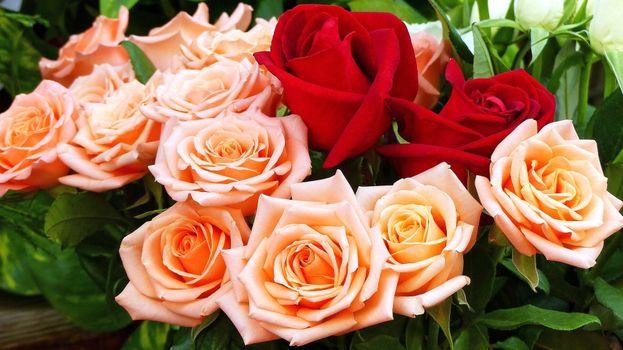 Бесплатные фото цветы,розы,букет