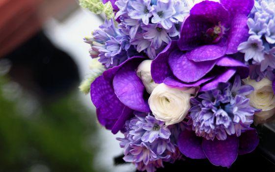 Фото бесплатно белый, орхидея, букет