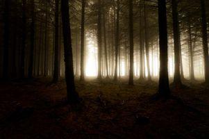 Заставки туман, природа, дымка