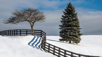 Бесплатные фото дерево,елка,волнистый,забор,соседи,снег,солнечный день