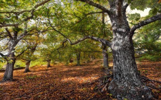 Бесплатные фото деревья,ветви,стволы,кора,листва,сухая,природа