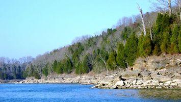 Бесплатные фото деревья,лес,елки,листья,озеро,вода,небо