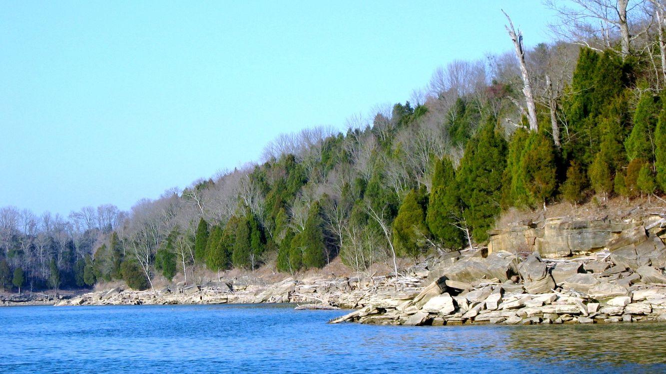 Фото бесплатно деревья, лес, елки - на рабочий стол