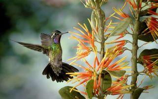 Фото бесплатно колибри, маленькая, птичка
