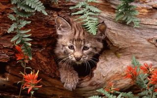 Бесплатные фото котенок,морда,лапа,дупло,листья,цветы,кошки