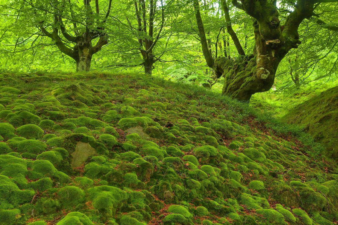 Фото бесплатно лес, деревья, холмы, мох, природа, природа