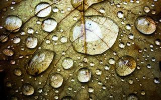 Photo free leaf, dew, drops