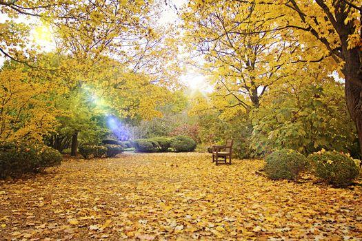 Фото бесплатно скамейка, осень, пейзаж