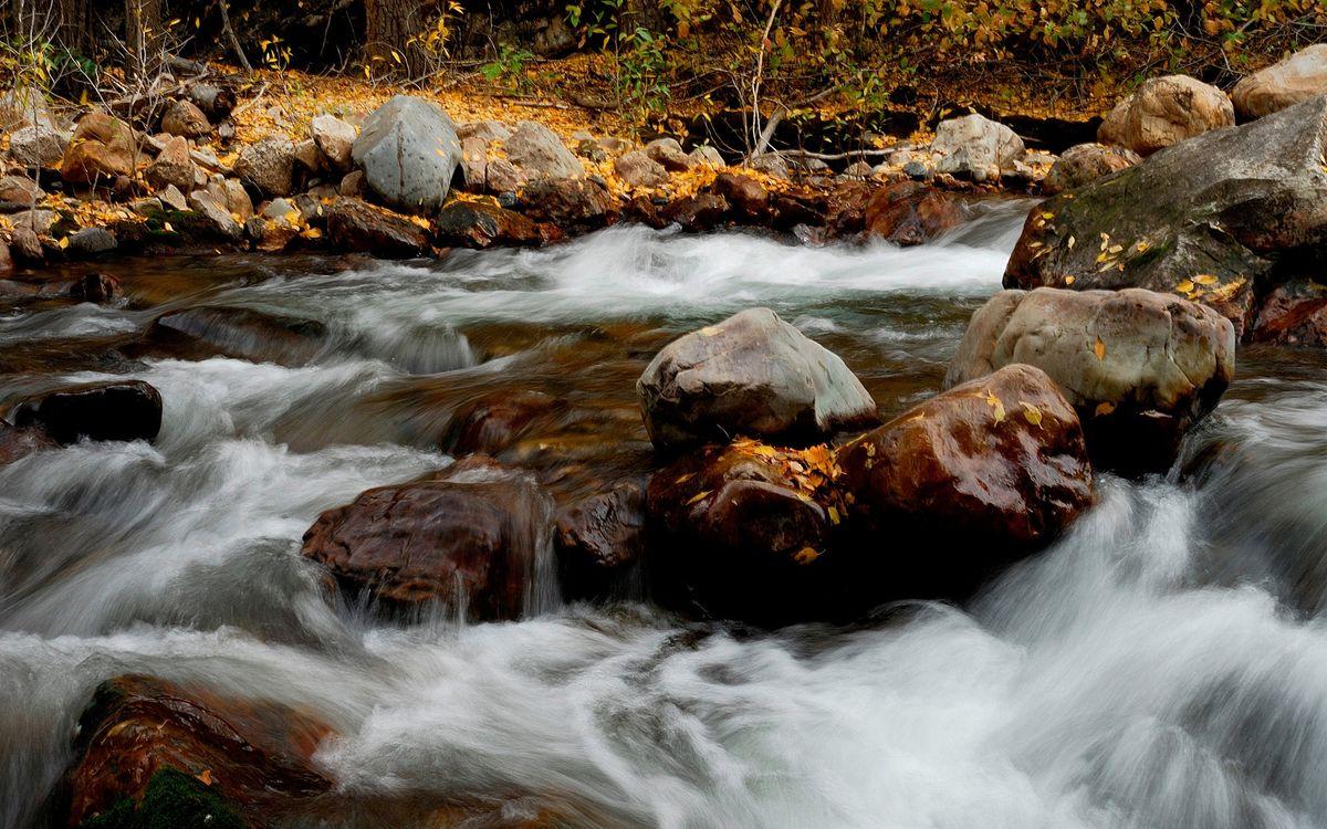 Фото бесплатно осень, листья, река - на рабочий стол