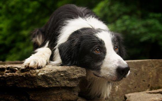 Фото бесплатно пес, дворняжка, лежит