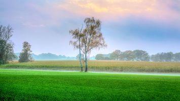 Бесплатные фото поле,туман,деревья,пейзажи