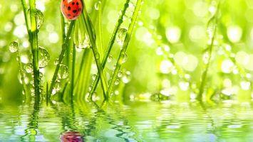 Бесплатные фото река,отражение,божья,коровка,трава,зеленая,природа