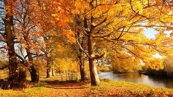 Бесплатные фото река,вода,осень,листья,деревья,парк,природа