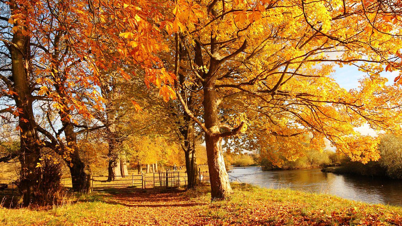 Обои река, вода, осень картинки на телефон