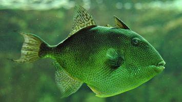 Заставки рыба, зеленая, глаза