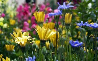 Бесплатные фото трава,зелень,клумба,растения,лепестки,листья,цветы
