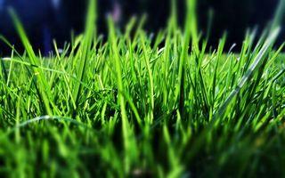 Фото бесплатно трава, зеленая, салатовая
