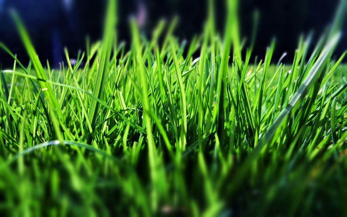 Фото бесплатно трава, зеленая, салатовая, зелень, лужайка, газон, травинки, лето, весна, природа, природа