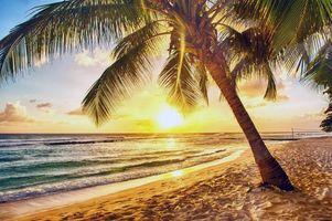 Бесплатная заставка тропики, море, пляж