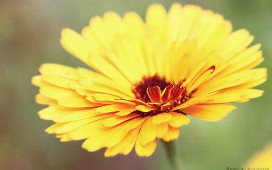 Бесплатные фото цветок,желтый,лепестки,тычинка,стебель,серединка,фото,цветы