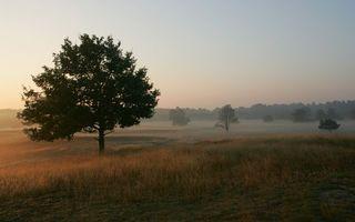 Бесплатные фото восход,поле,деревья,трава,туман,небо,природа