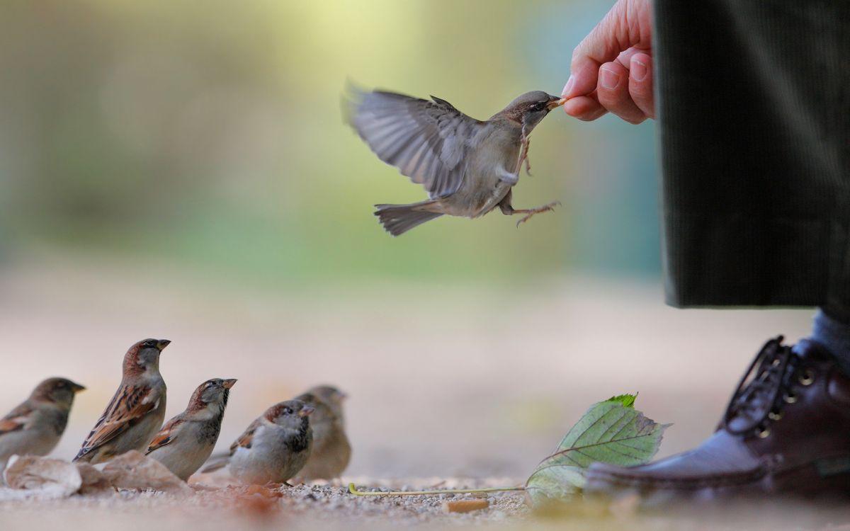 Фото бесплатно воробьи, человек, кормит, с руки, семечки, разное, разное