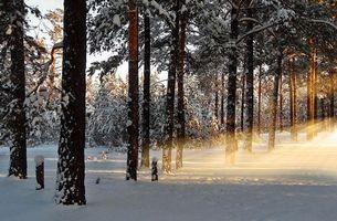 Бесплатные фото лес,снег,утро,природа,рассвет,лучи,зима
