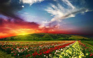 Фото бесплатно rose valley, розы, scenery, countryside, долина, nature, horizon, beautiful landscape