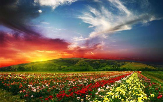 Фото бесплатно розовая долина, розы, пейзаж