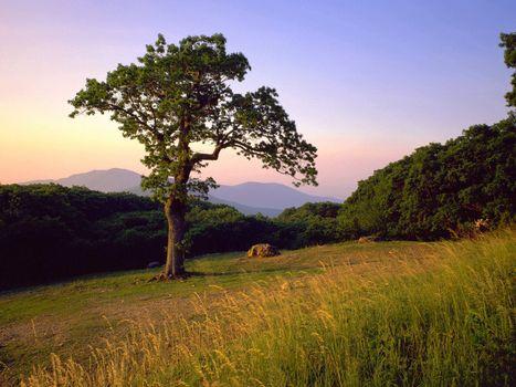 Фото бесплатно дерево, холм, валун