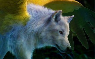 Фото бесплатно белый, волк, крылья