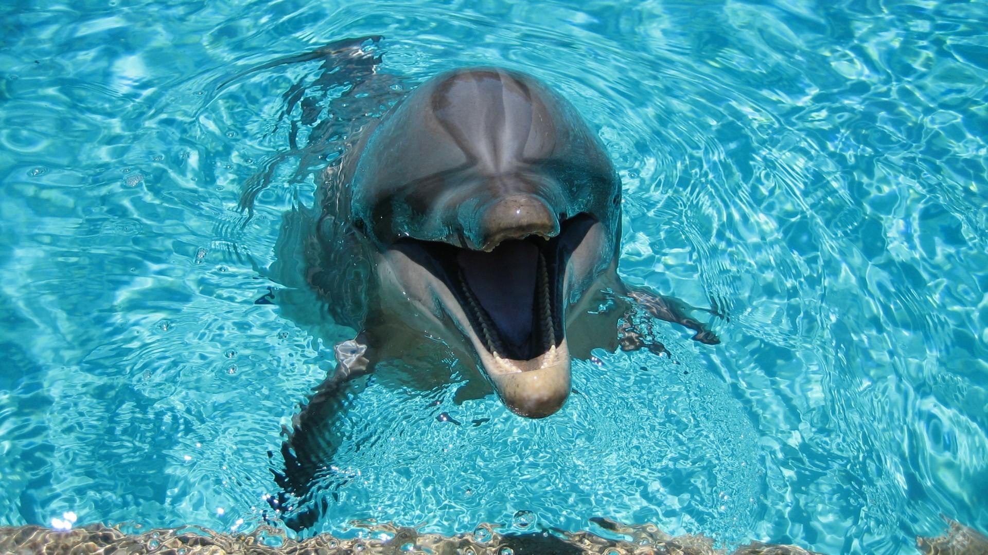 дельфин, вода, прозрачная