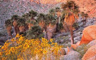Бесплатные фото деревья,камни,цветы,желтые,трава,горы,природа