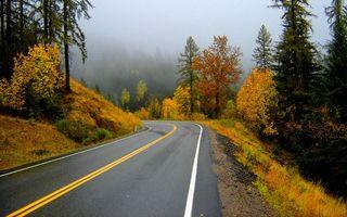 Бесплатные фото дорога,лес,деревья,полоса,разметка,осень,природа