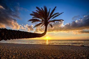Бесплатные фото Гавайи,море,закат,берег,пляж,пальма,пейзаж
