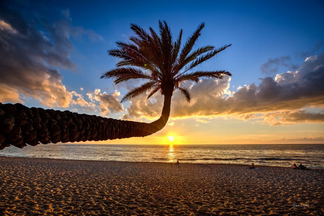 Фото бесплатно Гавайи, море, закат, берег, пляж, пальма, пейзаж, пейзажи