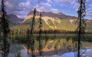 Бесплатные фото горы,камень,скалы,небо,облака,мох,деревья