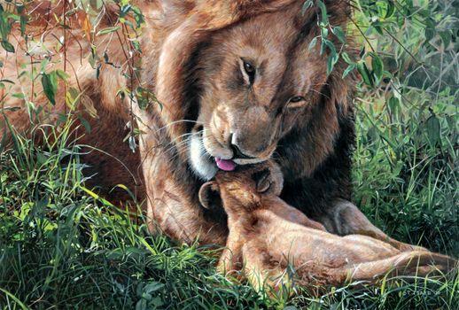 Фото бесплатно кошки, львы, прайды