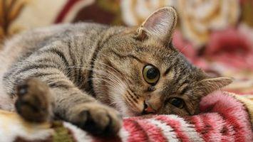 Заставки кот, морда, глаза