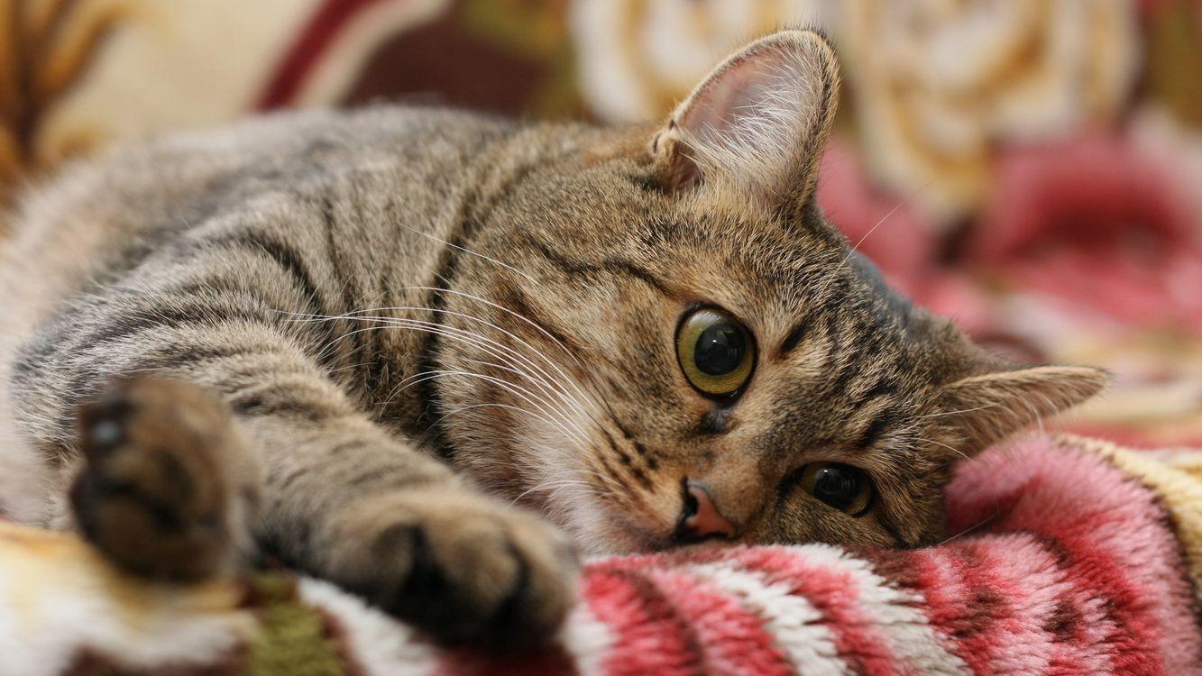 Фото бесплатно шерсть, морда, кошки - на рабочий стол