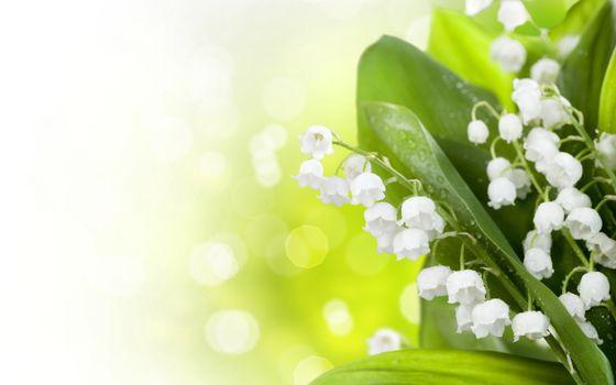 Фото бесплатно ландыши, бутоны, листья